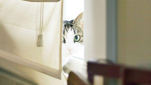 Evita los arañazos del gato en los muebles