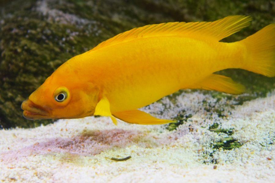 sustrato para mi acuario