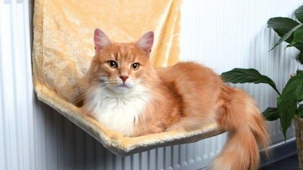 Camas bien abrigadas para gatos frioleros