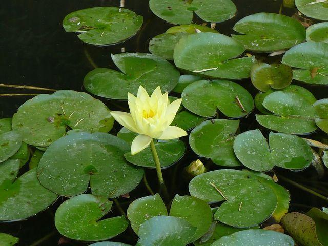 C mo preparo mi estanque para el invierno tiendanimal for Productos para estanques de peces
