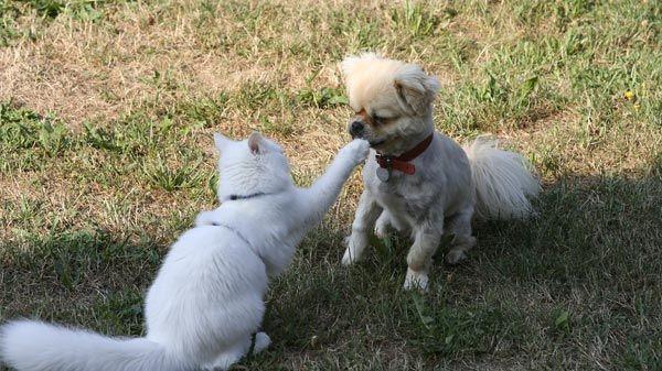 Alimentación de las mascotas con insuficiencia renal crónica