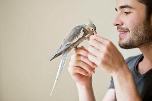 teflon-toxico-para-las-aves
