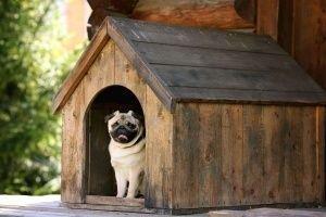 Cómo escoger una caseta para mi perro