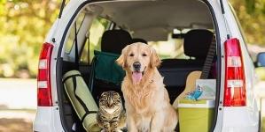 Viajar con mascotas: cómo desplazarse seguro en coche
