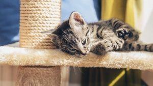 Rascadores para gatos: ¿cual es el mejor para mi mascota?