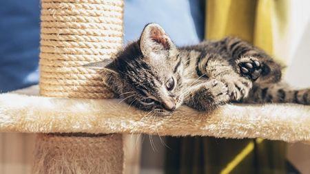 Rascadores para gatos: ¿cuál es el mejor para mi mascota?