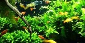 ¿Qué necesito para aportar CO2 al acuario?