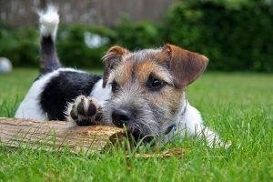¿Como puedo ayudar a mi perro nervioso?
