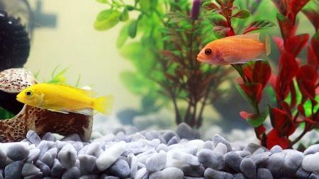 Cuidados al usar medicamentos en tu acuario
