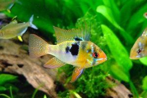 Guía para usar los medicamentos Seachem en el acuario