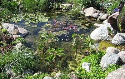 Tareas de primavera en el estanque