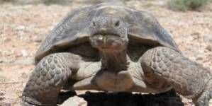 Cómo crear un hábitat en el jardín para tortugas terrestres