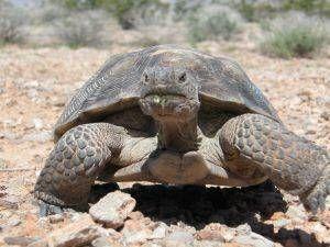 C mo crear un h bitat en el jard n para tortugas for Como hacer un lago en el jardin