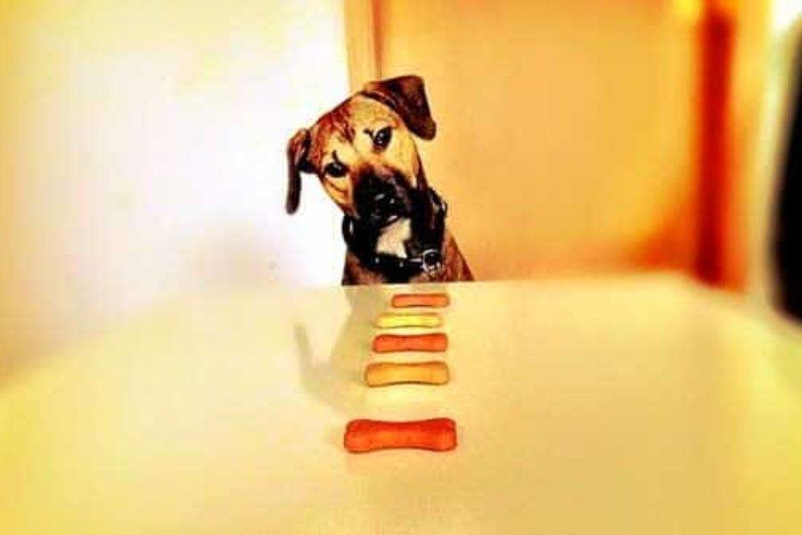 Cómo escoger un pienso para mi perro