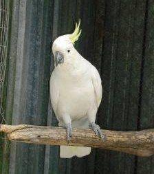 Consejos para escoger una percha para aves
