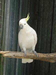 Perchas para aves