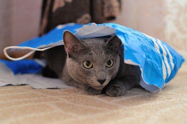 Los juegos del gato
