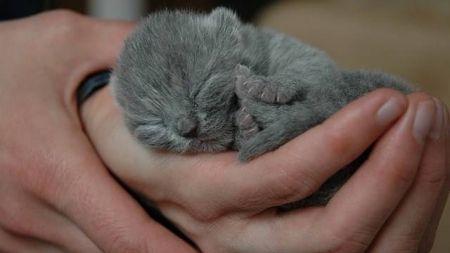 Cómo hacer que la llegada de un nuevo gatito sea genial