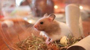 Jaulas para hamsters y jerbos