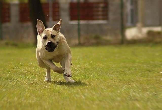 Consejos para hacer actividades al aire libre con tu perro