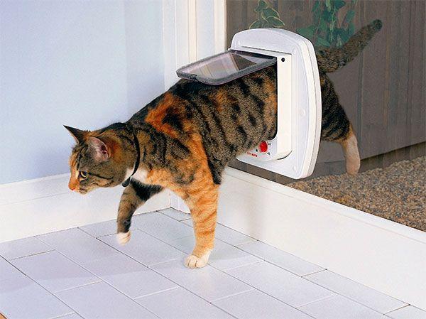 Para qu necesito una puerta para gatos tiendanimal - Que necesito para pedir una hipoteca ...