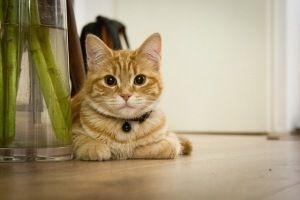 Mi gato trepa a la mesa y la encimera ¿Cómo lo corrijo?