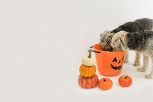 Animales-y-Halloween-tiendanimal