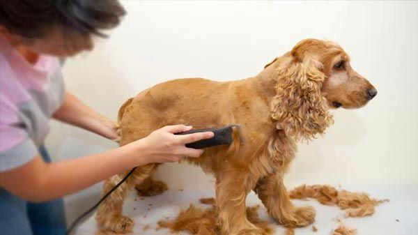 Cuchillas para corte de pelo canino