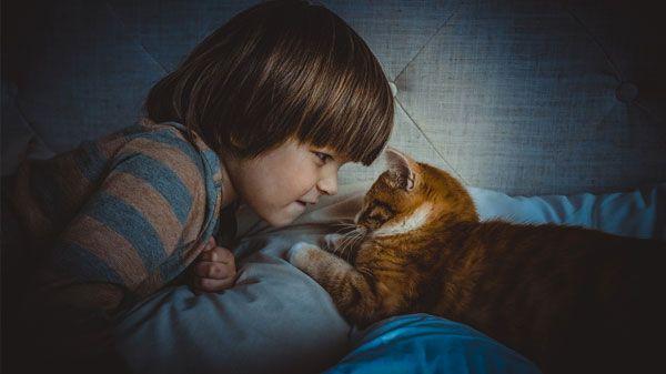 ¿Los parásitos de las mascotas pueden enfermar a los niños?