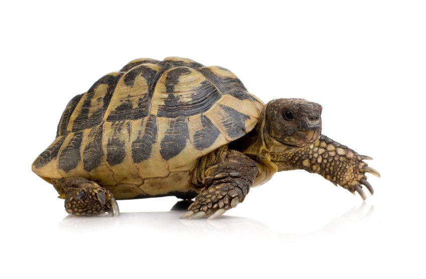 tortuga-tierra-casa-1