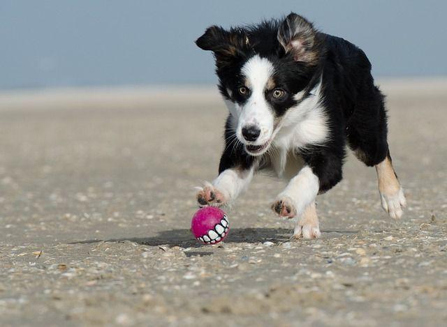 Cuál es el mejor juguete para tu mascota
