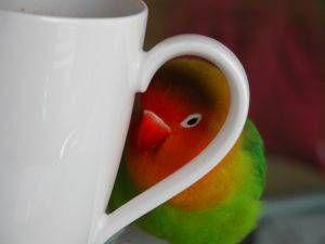 ¿Que debe comer mi ave?