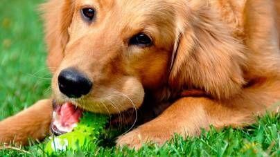 La importancia del juego en el perro