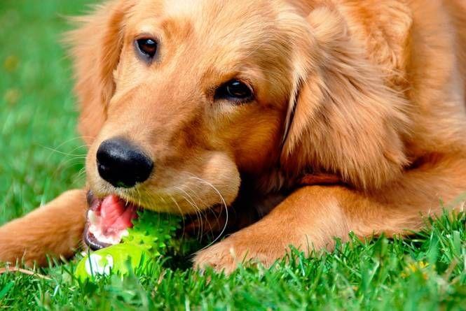 Los niveles de un problema de conducta del perro