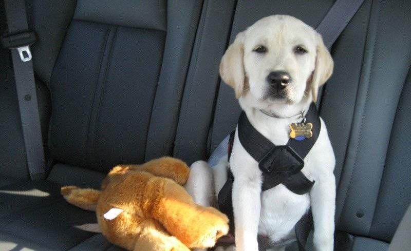 Tu perro y el coche: Seguridad y consejos. Parte I