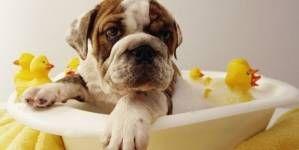 Pautas para el aseo habitual del perro