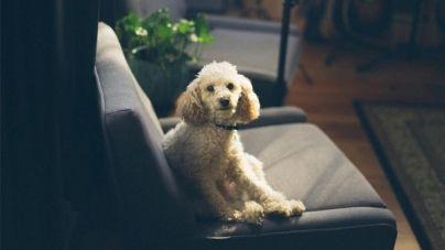 Cómo mejorar la llamada de tu perro