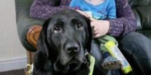 Heroico perro guía salva a su familia de ser atropellados