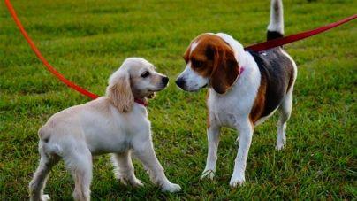 Perros reactivos durante el paseo: ¿Cómo trabajar con ellos?