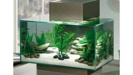 Como limpiar el acuario sin perder ningún pez