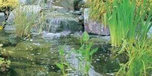¿Qué filtro me conviene instalar en el estanque?