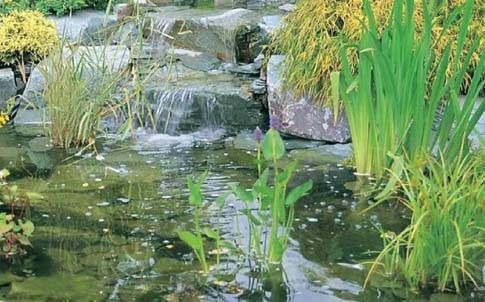Qu filtro me conviene instalar en el estanque tiendanimal for Filtros de agua para estanques de peces