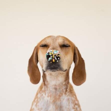 Los perros mas famosos de la red