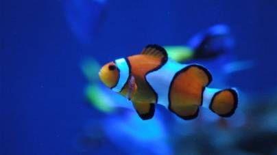 ¿Cuántos peces puedo mantener en mi acuario? ¿Cómo determino el espacio ideal que necesitan los peces que quiero tener?