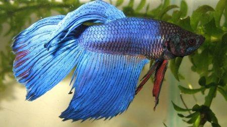 Breve guía para determinar el espacio ideal que necesitan los peces que quiero tener.