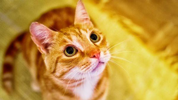 ¿Cómo ven los gatos?
