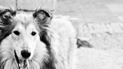¿Cómo controlar los impulsos de tu perro?