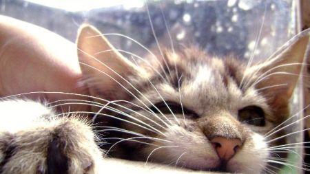¿Por qué mi gato me muerde? – Parte I