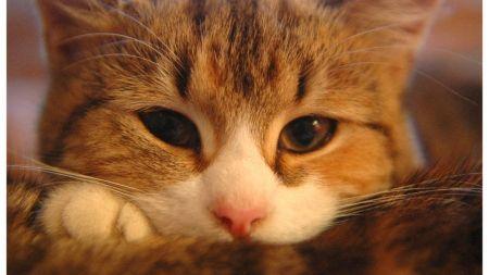 5 curiosidades que no sabías sobre gatos