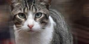 ¿Por qué me muerde mi gato? – Parte II